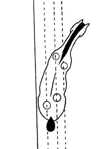 shoulder in
